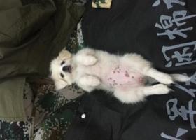 寻狗启示,吉林省白城市八女大楼附近端午晚上丢失一只白色小笨狗崽,它是一只非常可爱的宠物狗狗,希望它早日回家,不要变成流浪狗。