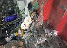 寻狗启示,白城市八女大楼附近端午节晚上丢失一只白色小狗崽,请好心人帮帮忙!,它是一只非常可爱的宠物狗狗,希望它早日回家,不要变成流浪狗。