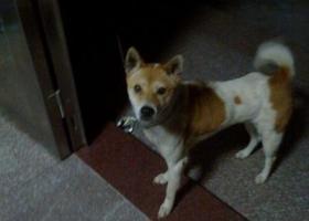 我的狗丢了叫努努,求各位帮忙找找,谢谢了!!!