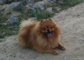 我养了8年的宝贝狗狗被人偷走了