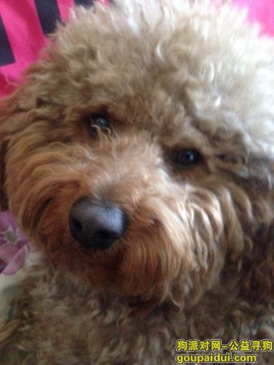 松原寻狗启示,松原的爱狗人士帮忙找一下我家狗狗,它是一只非常可爱的宠物狗狗,希望它早日回家,不要变成流浪狗。