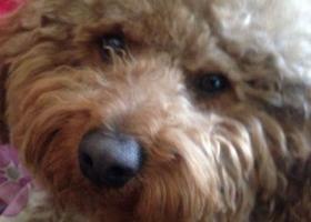 寻狗启示,松原的爱狗人士帮忙找一下我家狗狗,它是一只非常可爱的宠物狗狗,希望它早日回家,不要变成流浪狗。