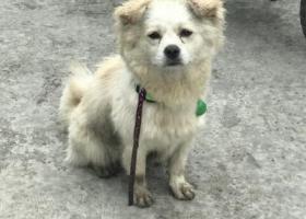 6月4日(周日)下午 三全路丰庆路交叉口捡到的狗狗