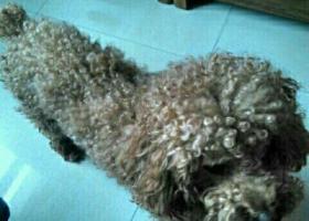 寻狗启示,狗狗丟了,发个帖子找狗,它是一只非常可爱的宠物狗狗,希望它早日回家,不要变成流浪狗。