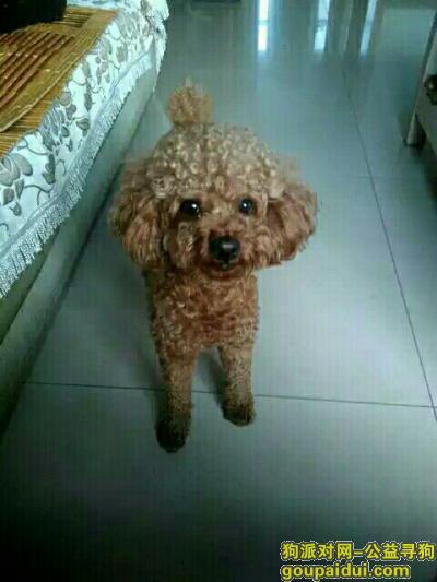 晋城寻狗网,狗狗丟了50天了,怎么会这样啊,它是一只非常可爱的宠物狗狗,希望它早日回家,不要变成流浪狗。
