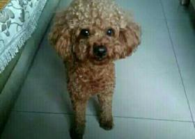 寻狗启示,狗狗丟了50天了,怎么会这样啊,它是一只非常可爱的宠物狗狗,希望它早日回家,不要变成流浪狗。