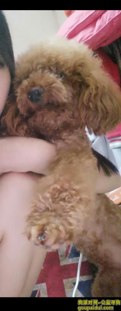 潮州寻狗网,饶平县黄岗镇大家帮我家狗狗回家,它是一只非常可爱的宠物狗狗,希望它早日回家,不要变成流浪狗。