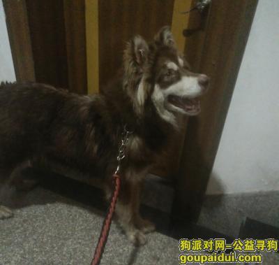 金华捡到狗,这几天下着雨,早上吃饭时候发现的,给它吃了东西就一直跟着我,,它是一只非常可爱的宠物狗狗,希望它早日回家,不要变成流浪狗。