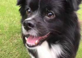 寻狗启示,大庆市龙凤区卧里屯丢失一条公狗,恳求好心人提供线索,它是一只非常可爱的宠物狗狗,希望它早日回家,不要变成流浪狗。