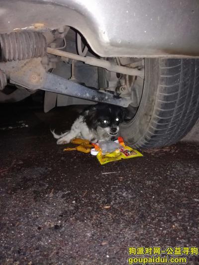 珠海捡到狗,前山心海洲千鹤广场处一只受伤的小狗在焦急等待着主人!,它是一只非常可爱的宠物狗狗,希望它早日回家,不要变成流浪狗。