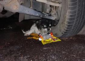 寻狗启示,前山心海洲千鹤广场处一只受伤的小狗在焦急等待着主人!,它是一只非常可爱的宠物狗狗,希望它早日回家,不要变成流浪狗。