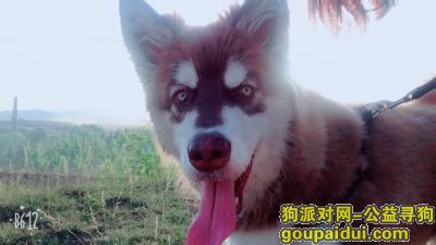 朝阳寻狗网,朝阳市喀左县公营子镇,它是一只非常可爱的宠物狗狗,希望它早日回家,不要变成流浪狗。