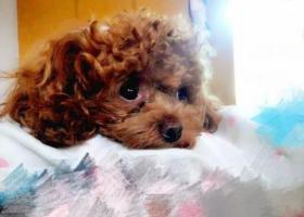 寻狗启示,山东枣庄6月17日寻找走失小狗,它是一只非常可爱的宠物狗狗,希望它早日回家,不要变成流浪狗。
