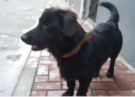 寻狗启示,帮忙找狗,必有重谢,拨打电话13906120312谢谢,它是一只非常可爱的宠物狗狗,希望它早日回家,不要变成流浪狗。