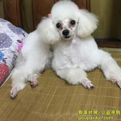 蚌埠找狗,重金5000寻狗启示!,它是一只非常可爱的宠物狗狗,希望它早日回家,不要变成流浪狗。