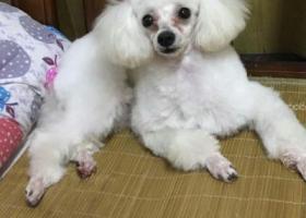 寻狗启示,重金5000寻狗启示!,它是一只非常可爱的宠物狗狗,希望它早日回家,不要变成流浪狗。