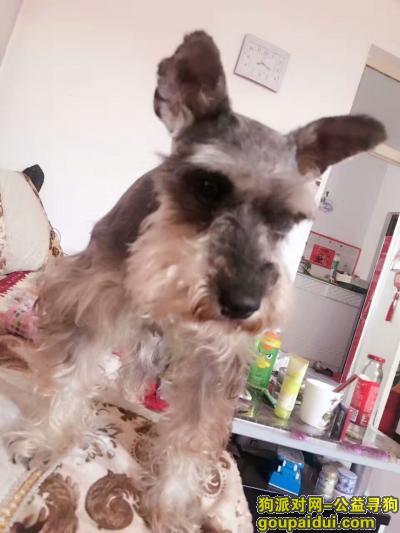 忻州寻狗启示,寻狗。有重谢。今天下午7点左右,它是一只非常可爱的宠物狗狗,希望它早日回家,不要变成流浪狗。
