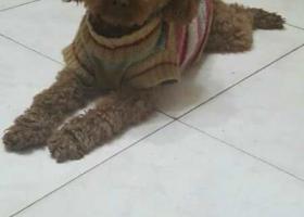 一万元寻爱狗,请各位好心人帮忙转发信息。谢谢大家了!