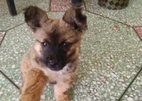 寻狗启示,寻找我里宝贝皮皮狗,它是一只非常可爱的宠物狗狗,希望它早日回家,不要变成流浪狗。