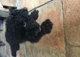 寻狗启示,家里跑来一只小黑狗希望有人认得13712324879,它是一只非常可爱的宠物狗狗,希望它早日回家,不要变成流浪狗。
