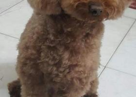 一万元寻爱狗,请捡到狗狗的好心人善待它