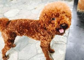 @觅路逢南:拜托,注意一下乐意居附近,昨晚在乐意居走丢一只棕色泰迪狗名叫多多,能帮忙找到必有酬谢,或者拍到照片联系也可以李生13528274398
