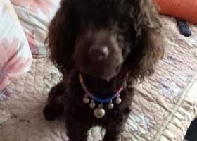 寻狗启示,在临沂k27路公交车站附近丢失狗名卡卡,它是一只非常可爱的宠物狗狗,希望它早日回家,不要变成流浪狗。