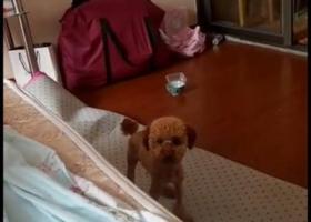 寻狗启示,各位帮我转一下谢谢,望好心人帮忙,它是一只非常可爱的宠物狗狗,希望它早日回家,不要变成流浪狗。