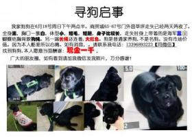 寻狗启示,义乌寻狗全身黑胸口一簇白6月18日走失短毛腿特别特别短,它是一只非常可爱的宠物狗狗,希望它早日回家,不要变成流浪狗。