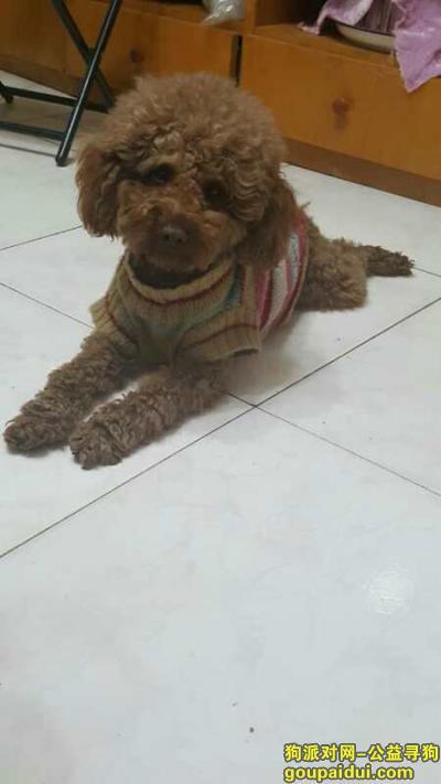 寻狗启示,一万元寻爱狗!请各位好心人帮忙转发信息。谢谢大家了!,它是一只非常可爱的宠物狗狗,希望它早日回家,不要变成流浪狗。