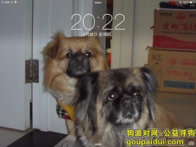 【北京找狗】,寻找在劲松电影院附近跑丢的爱犬,它是一只非常可爱的宠物狗狗,希望它早日回家,不要变成流浪狗。