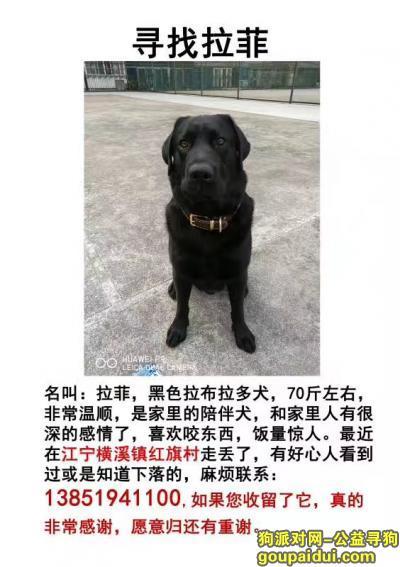【南京找狗】,我的拉菲还没回家,请大家帮帮忙留意这个孩子,它是一只非常可爱的宠物狗狗,希望它早日回家,不要变成流浪狗。