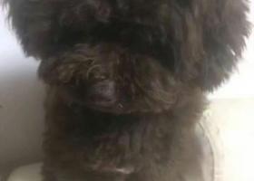 寻狗启示,2017.6.25 在环城北路 ,新华新村门口走丢,它是一只非常可爱的宠物狗狗,希望它早日回家,不要变成流浪狗。
