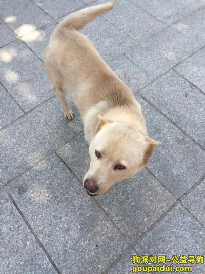 【广州找狗】,广州市天河区智慧城内或者高塘石附近,它是一只非常可爱的宠物狗狗,希望它早日回家,不要变成流浪狗。