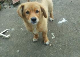 寻狗启示,吴中横泾,捡到狗啦!,它是一只非常可爱的宠物狗狗,希望它早日回家,不要变成流浪狗。