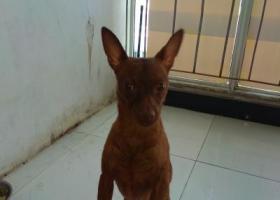 寻狗启示,狗狗被偷了,家人一样的伴侣,希望找回,它是一只非常可爱的宠物狗狗,希望它早日回家,不要变成流浪狗。