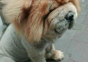 寻狗启示,狗狗,你在哪里。快点回来吧,它是一只非常可爱的宠物狗狗,希望它早日回家,不要变成流浪狗。