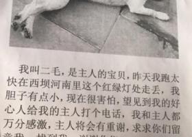 寻找北京朝阳区西坝河附近丢失的狗狗