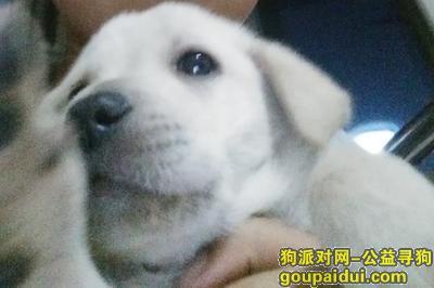 ,请广大爱狗人士找找它,它是一只非常可爱的宠物狗狗,希望它早日回家,不要变成流浪狗。