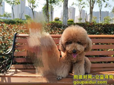 攀枝花寻狗启示,自驾游西藏路途丢失爱犬,它是一只非常可爱的宠物狗狗,希望它早日回家,不要变成流浪狗。