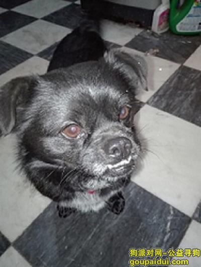 鹤壁寻狗启示,鹤壁找狗寻找山城区春雷路笨笨熊附近7月25日丢失的黑色小串串狗,它是一只非常可爱的宠物狗狗,希望它早日回家,不要变成流浪狗。