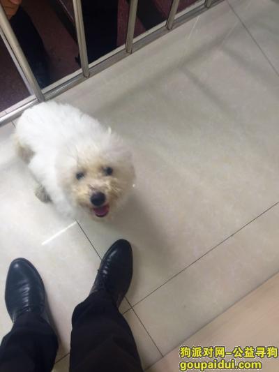 身材略胖,分不清是泰迪还是比熊,它是一只非常可爱的宠物狗狗,希望它