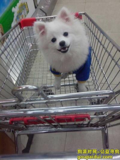 佳木斯寻狗启示,白色银狐狗在欧亚小镇丢失,它是一只非常可爱的宠物狗狗,希望它早日回家,不要变成流浪狗。