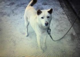 寻狗启示,四川,它是一只非常可爱的宠物狗狗,希望它早日回家,不要变成流浪狗。