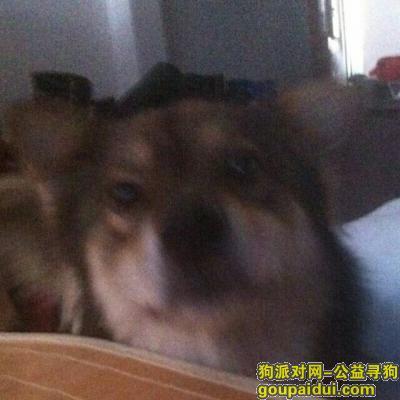 乐清寻狗启示,,它是一只非常可爱的宠物狗狗,希望它早日回家,不要变成流浪狗。
