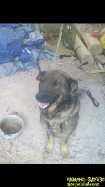 黔东南寻狗网,寻找走失未归武警军犬,它是一只非常可爱的宠物狗狗,希望它早日回家,不要变成流浪狗。