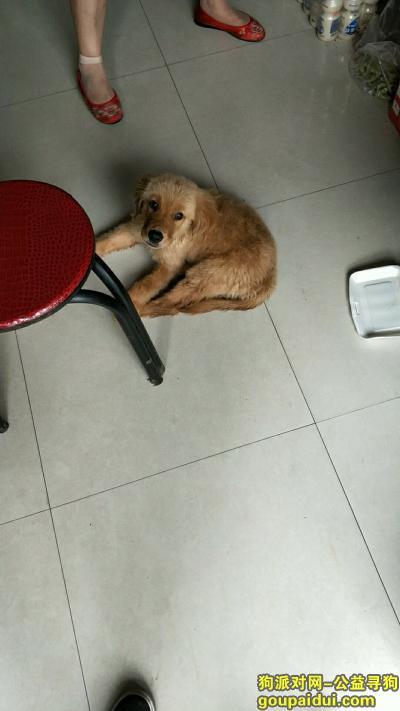 寻狗启示,紧急寻找爱犬小金毛!连云港新浦万德园2017.8.2号晚上在[幺妹烧烤]走丢,疑似被陌生人带走.,它是一只非常可爱的宠物狗狗,希望它早日回家,不要变成流浪狗。