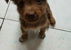 寻狗启示,找狗,8月1日丢失,请好心人捡到联系我,它是一只非常可爱的宠物狗狗,希望它早日回家,不要变成流浪狗。