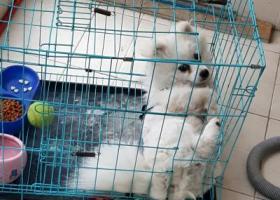 寻狗启示,1000元寻找爱犬必有重谢,它是一只非常可爱的宠物狗狗,希望它早日回家,不要变成流浪狗。