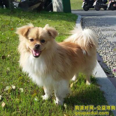 ,紧急寻狗启示,名叫小黄,它是一只非常可爱的宠物狗狗,希望它早日回家,不要变成流浪狗。